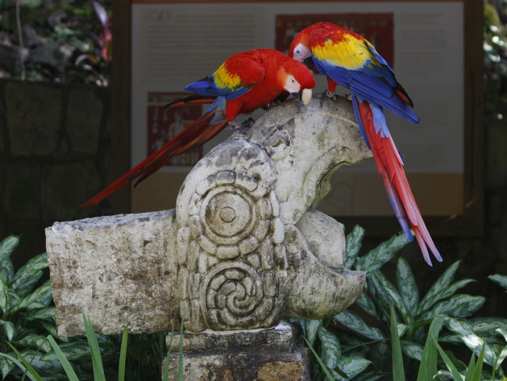 macaw3